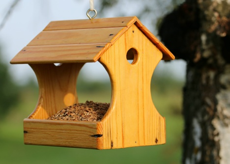 feeder-birds-feed-help-158139
