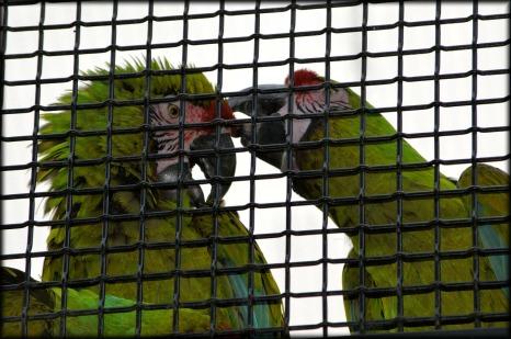 parrot-218849_1280